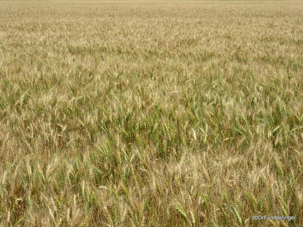 06 Prairie crops, Manitoba (10)
