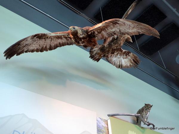 02 Kluane National Park Visitor Center (19)