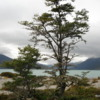 Ainsworth Bay -- Tierra del Fuego