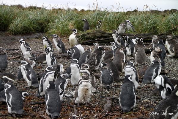 10 Tucker Islets. Magellanic penguin