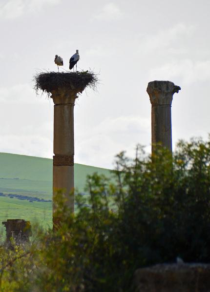 Roman site of Volubilis 5