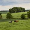 Markenfield landscape.