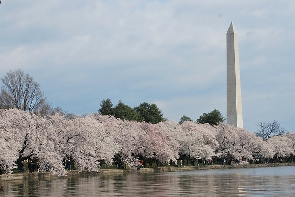 Washington-Monument3