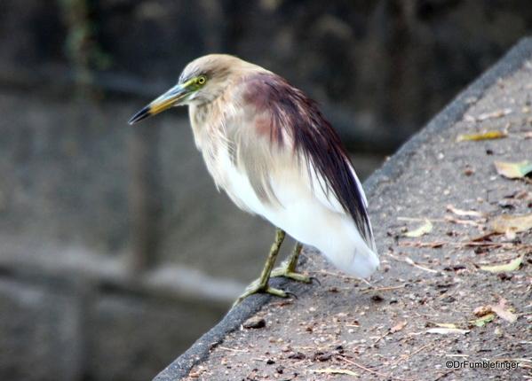 02 Polonnaruwa (2)