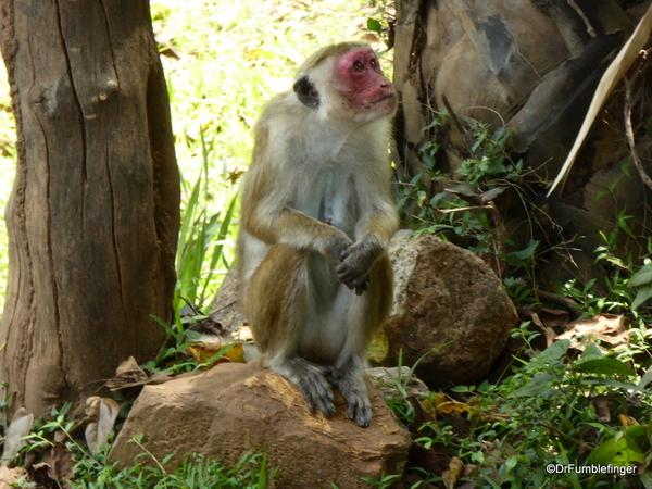 02 Polonnaruwa