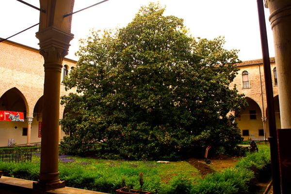 san antonio courtyard
