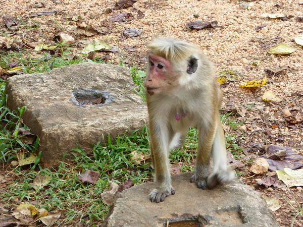 Polonnaruwa (238)