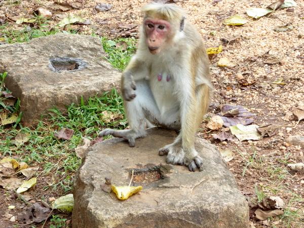 Polonnaruwa (240)