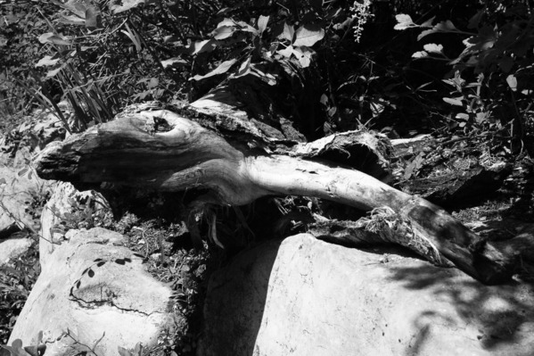 sandia log 1
