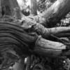 sandia log 4