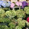 21 Hay Market (9)