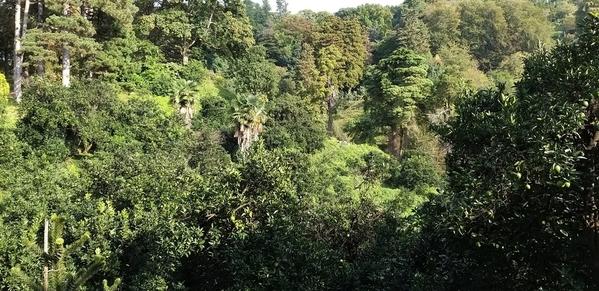 03 2019-10-27 Georgia Batumi Botanical Garden Mtirala National Park 46