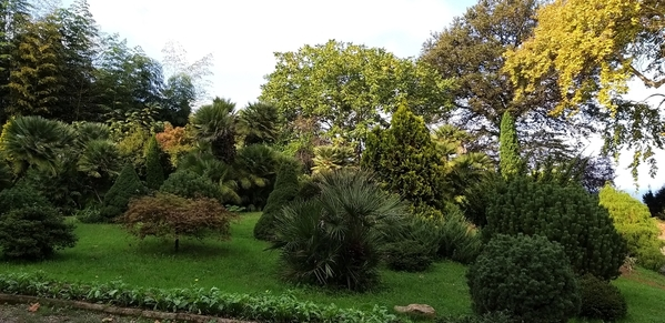 05 2019-10-27 Georgia Batumi Botanical Garden Mtirala National Park 20