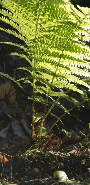 06 2019-10-27 Georgia Batumi Botanical Garden Mtirala National Park 37