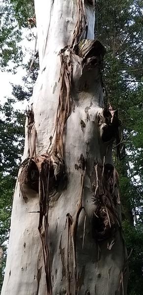 07 2019-10-27 Georgia Batumi Botanical Garden Mtirala National Park 13