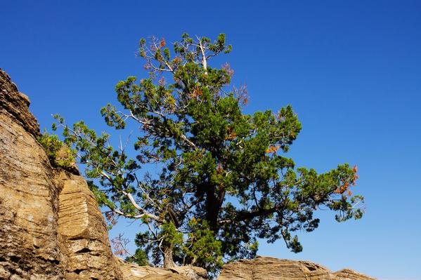 nambe tree 02
