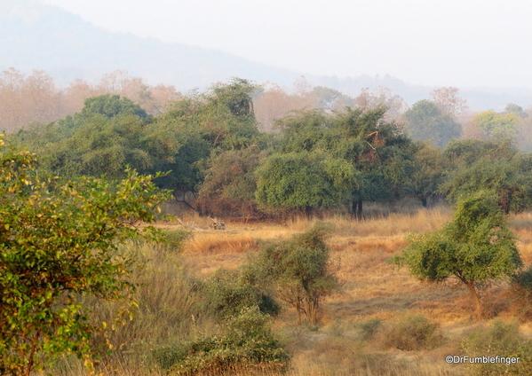 03 Panna Tiger Reserve