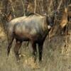 07 Panna Tiger Reserve  (1)