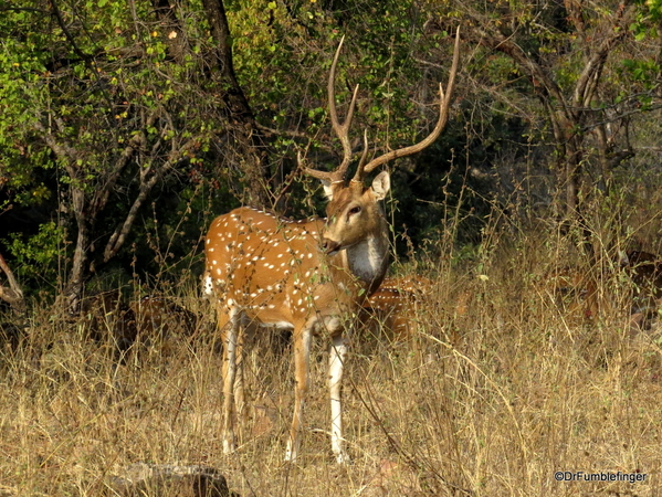 09 Panna Tiger Reserve (1)