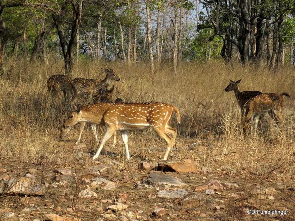 09 Panna Tiger Reserve (2)