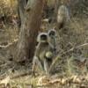 10 Panna Tiger Reserve  (1)
