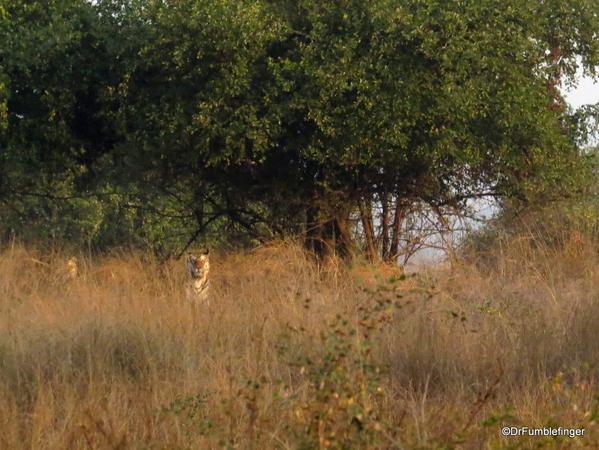 Panna Tiger Reserve (22)