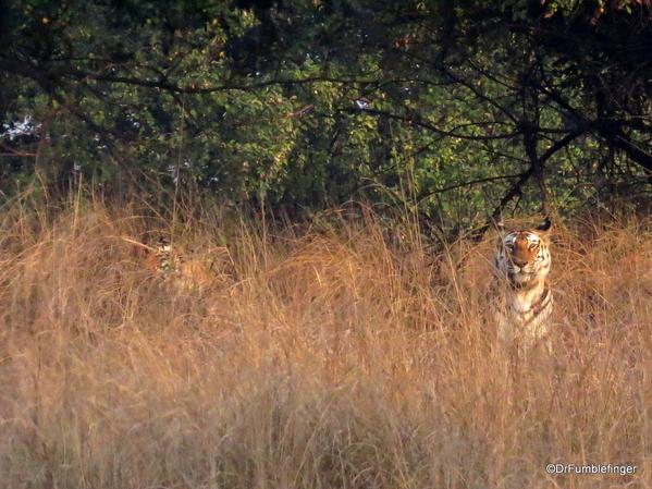 Panna Tiger Reserve (25)