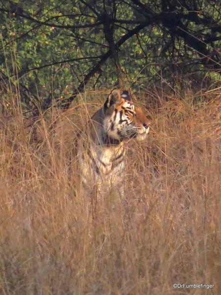 Panna Tiger Reserve (33)