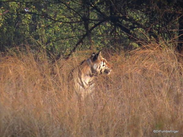 Panna Tiger Reserve (46)