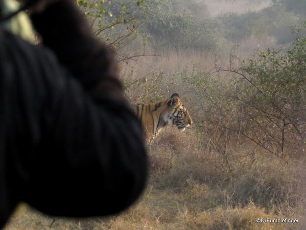 Panna Tiger Reserve (51)