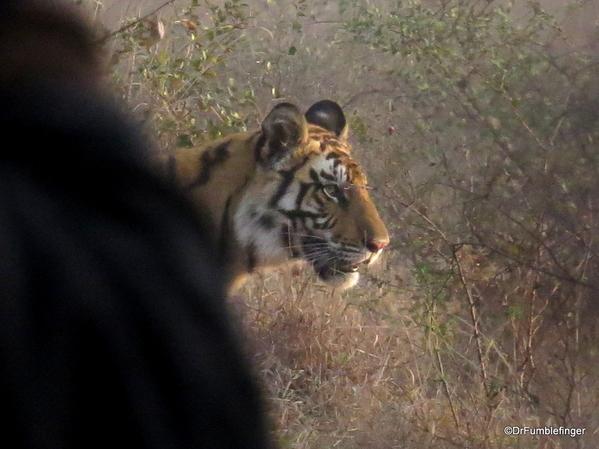 Panna Tiger Reserve (54)