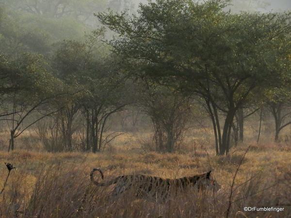 Panna Tiger Reserve (57)