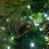 garland reflection