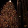 roc center tree 04
