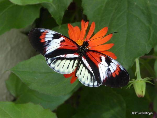 08 Butterfly World, Florida (20)