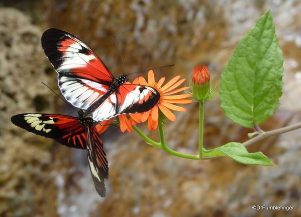 09 Butterfly World, Florida (53)