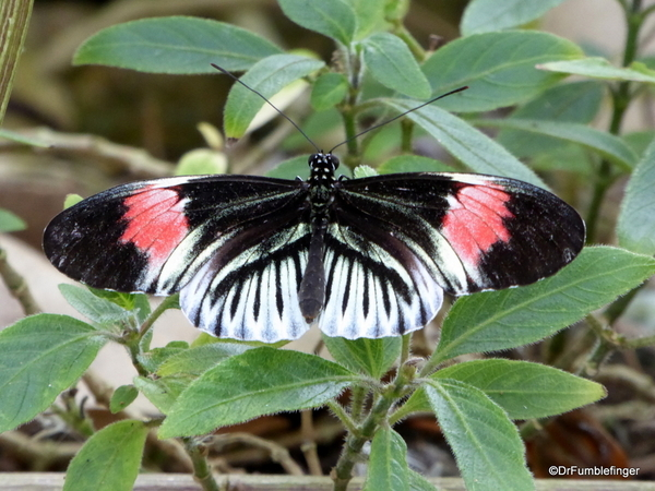 10 Butterfly World, Florida (49)