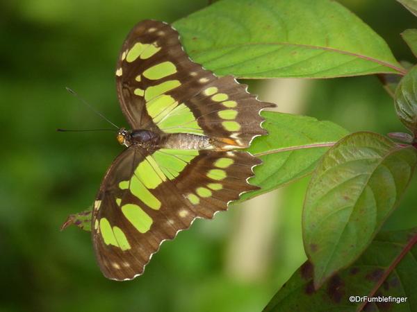 12 Butterfly World, Florida (56)