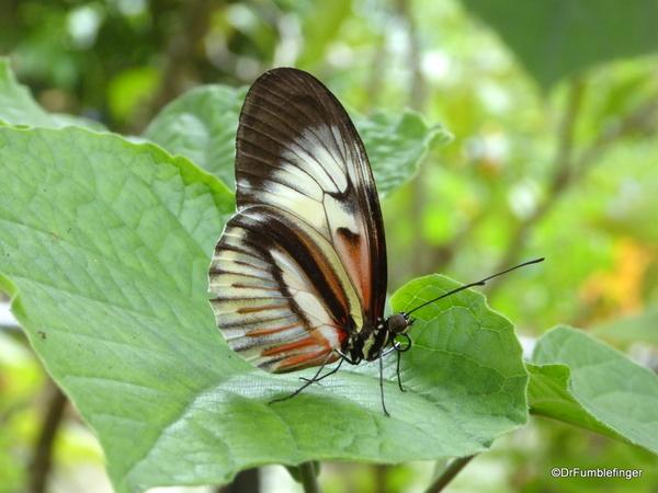 13 Butterfly World, Florida (40)
