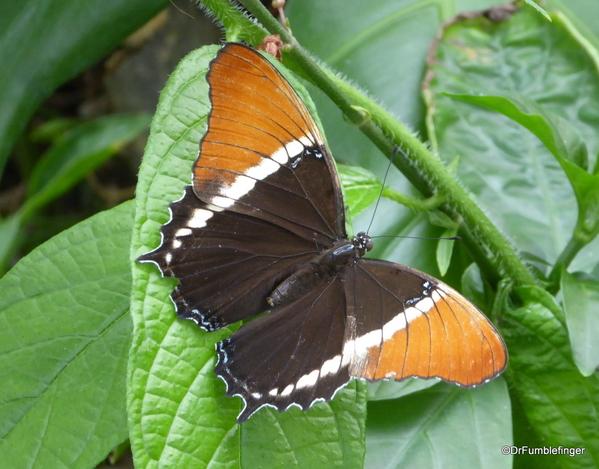 14 Butterfly World, Florida (44)
