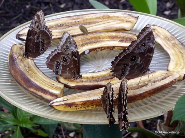 15 Butterfly World, Florida (22)
