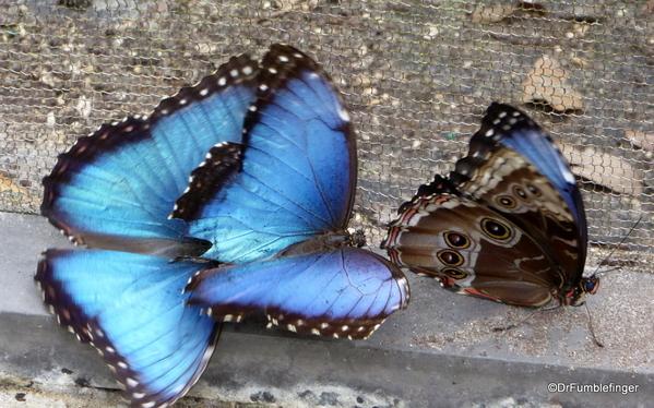 17 Butterfly World, Florida (34)