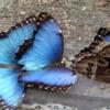 Butterfly World, Florida