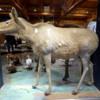 02 MacBride Museum, Whitehorse