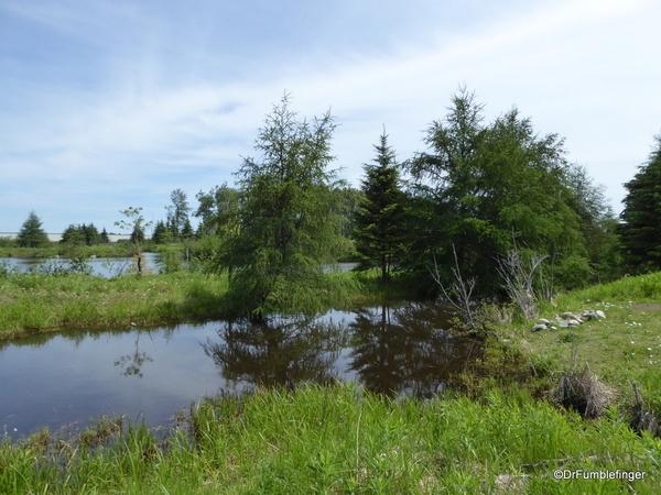 03 Mission Island Marsh