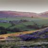 Commondale heather.