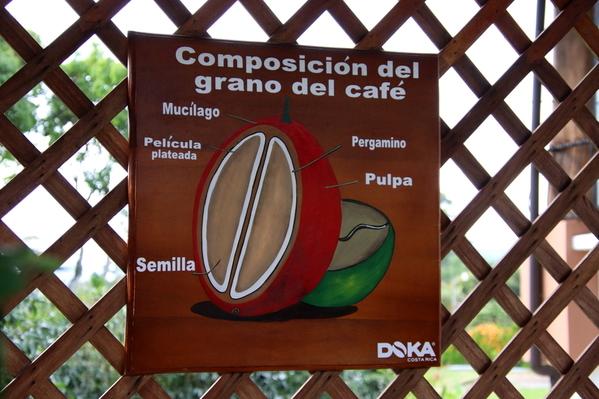 03-04 Doka Coffee Plantation (11)