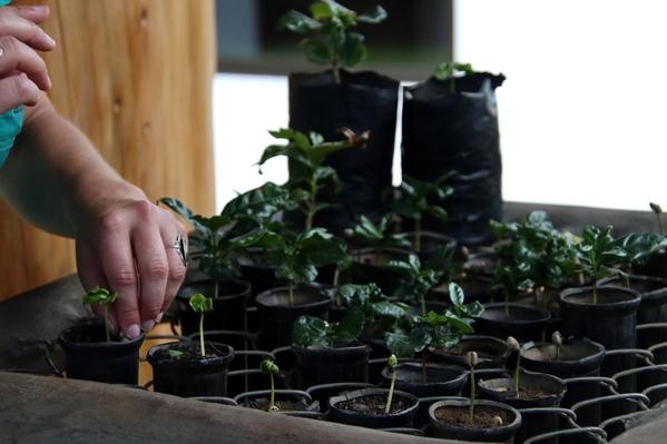 04-04 Doka Coffee Plantation (12)