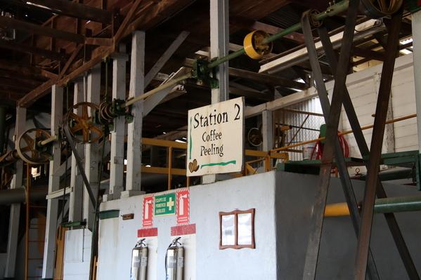 13-04 Doka Coffee Plantation (32)