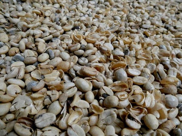18-04 Doka Coffee Plantation (44)
